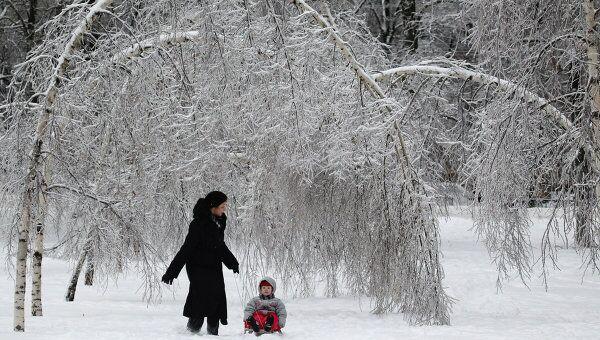 Деревья, поврежденные после ледяного дождя в Москве. Архив
