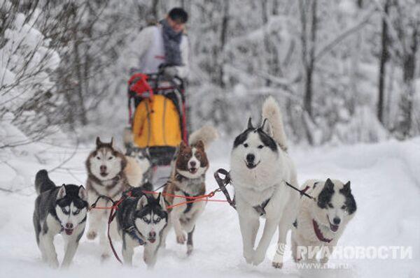 Международная гонка на собачьих упряжках По земле Сампо