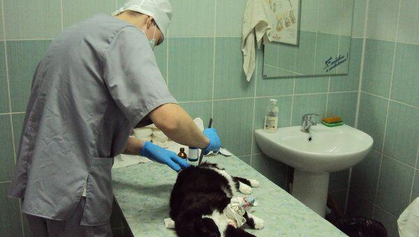 ветеринар Омск хирург врач