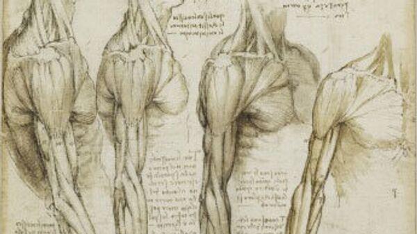 Рисунок Леонардо да Винчи. Анатомия человека
