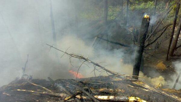 Лесной пожар в Ногинском районе Подмосковья