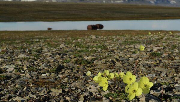 Национальный парк Русская Арктика, архивное фото