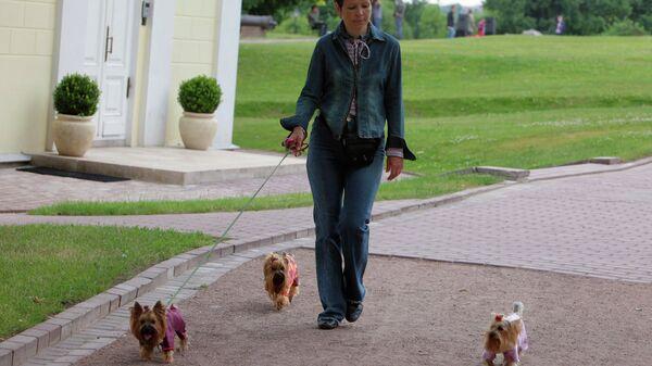 Женщина гуляет с собаками