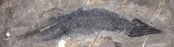 На Аляске обнаружили самый полный скелет предшественника динозавров