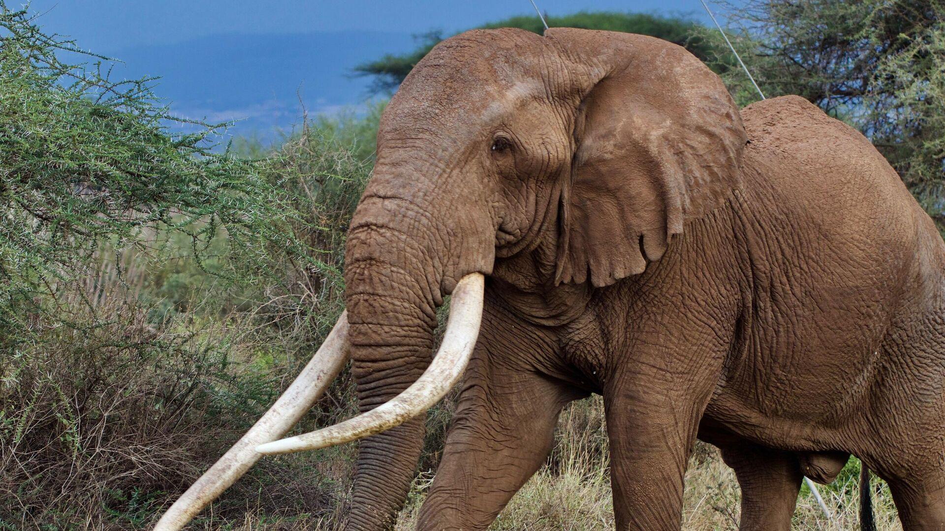 1564297077 0:304:2560:1744 1920x0 80 0 0 1d81cd67b0501a5939ebb924c49be190 - В ЮАР слон заблокировал автодорогу в заповеднике