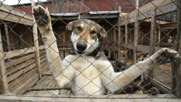 Приют для собак, архивное фото