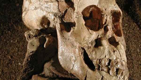 Череп афарского австралопитека по кличке Селам, обнаруженный в 2000 году в Эфиопии