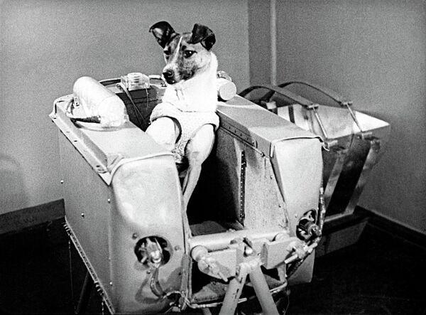 Лайка в кабине спутника