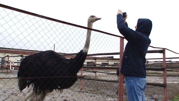 Здесь был я: храм-ротонда, ферма страусов и парк Питомник в Серпухове