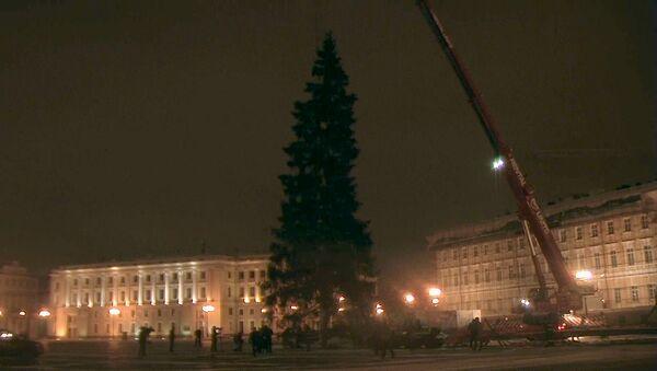 Вековую новогоднюю ель спилили и доставили в Санкт-Петербург