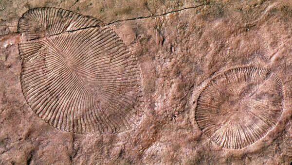 Древнейшие многоклеточные организмы, обнаруженные в протерозойских породах в австралийских Эдиакарских холмах