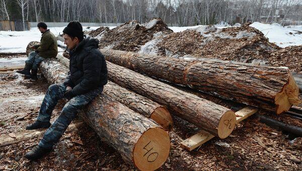 На лесопромышленном предприятии. Архивное фото