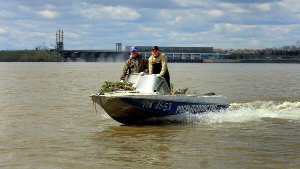 Новосибирские специалисты создали на Оби искусственные нерестилища для рыб из еловых веток