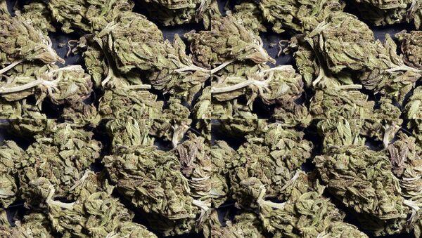 Засушенная марихуана. Архивное фото