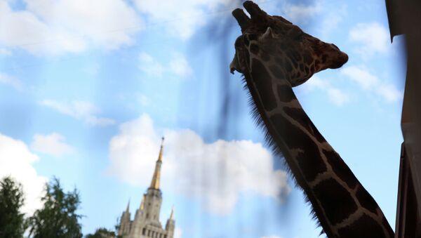 Московский зоопарк. Архивное фото