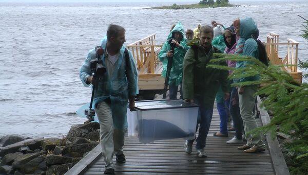 Нерп выпустили на Валааме под штормовое предупреждение