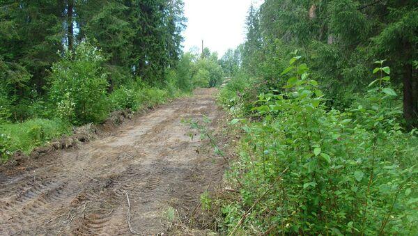 В Сиверском лесу Ленинградской области