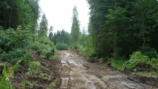 В Сиверском лесу Ленинградской области. Архивное фото