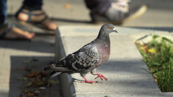 В Москве обеспокоены гибелью голубей
