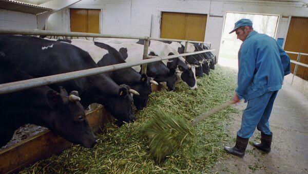 Комплекс по производству молока, архивное фото