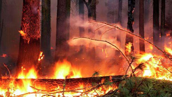 Лесной пожар в районе Йосемитского национального парка в американском штате Калифорния
