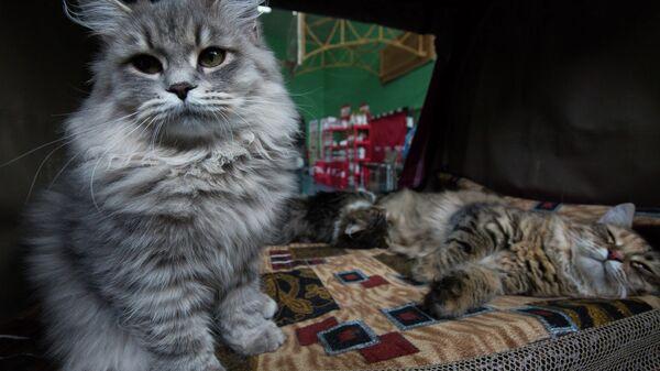 Лучших усатых-полосатых выбрали во Владивостоке