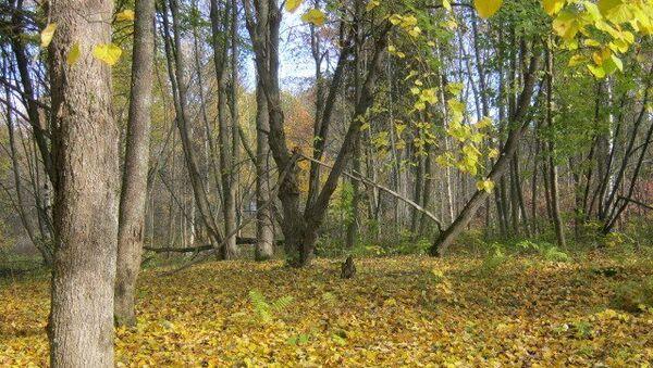 Лес в Ленобласти. Архивное фото