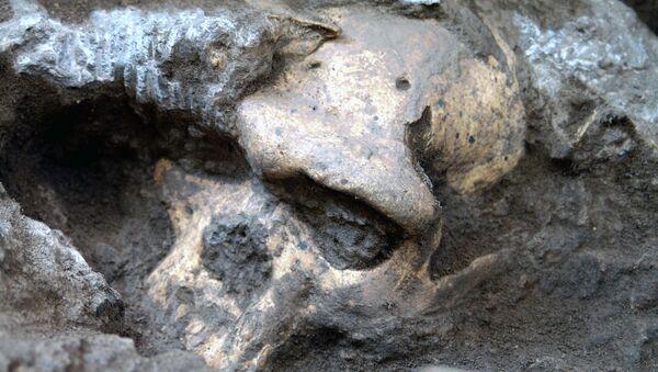 Черепа, найденные в Дманиси, Грузия