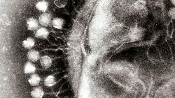 Кластер бактериофаги, вирусы, которые эволюционировали