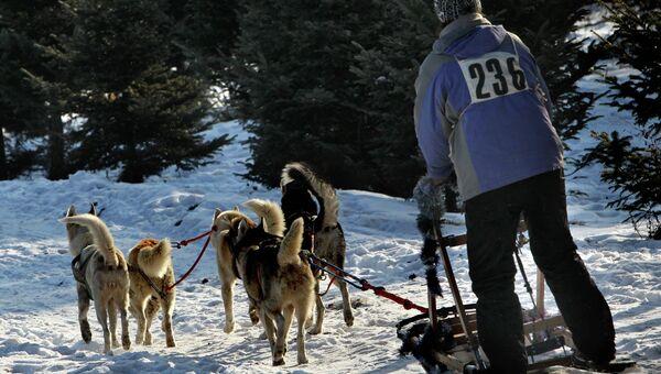 Состязания собачьих упряжек. Архивное фото