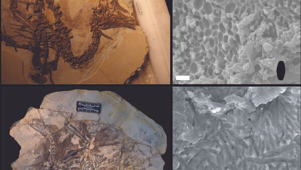 Останки и меланосомы пушистого бэйпяозавра и древней протоптицы
