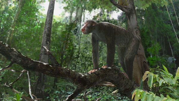 Ранние обезьяны проконсулы жили во влажных теплых тропических лесах на востоке экваториальной Африки