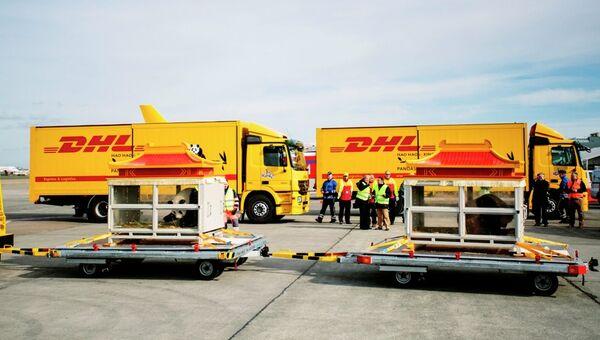 Двух больших панд доставили самолетом в Бельгию из Китая