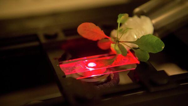 Ученые измеряют эффективность фотосинтеза в листе растения с углеродными нанотрубками