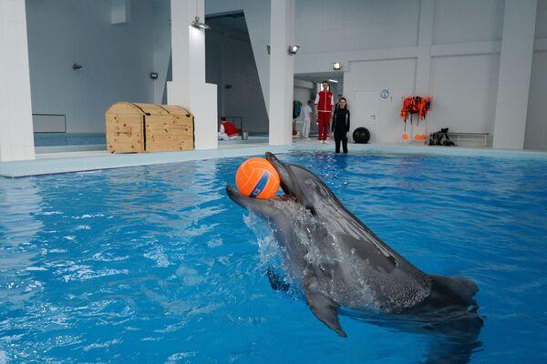 Дельфин в центре океанографии