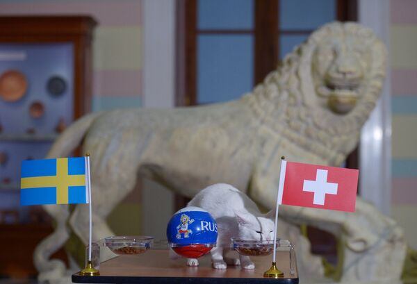 Кот Ахилл предсказал победу сборной Швейцарии над сборной Швеции в матчем ЧМ-2018 по футболу