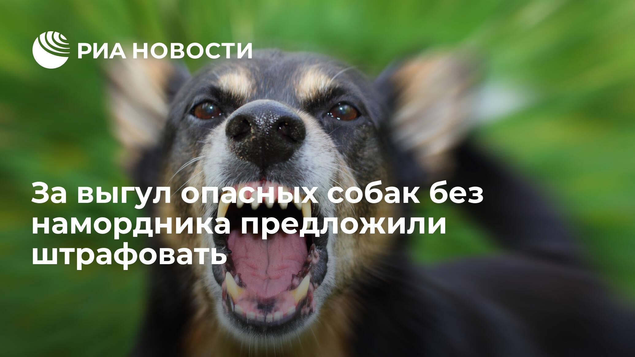 За выгул опасных собак без намордника предложили штрафовать