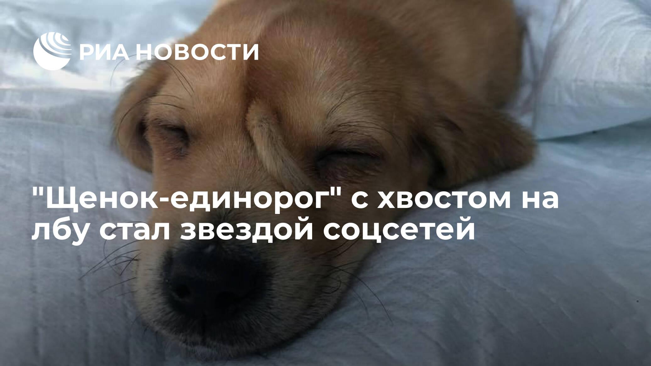 коронавирус щенок